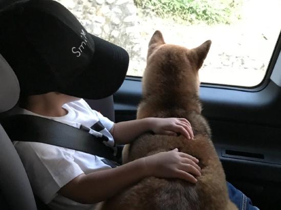 Ella带儿子和爱犬出游 布丁乖乖趴劲宝身上很有爱